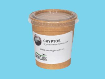 Cryptolaemus larwy 100 szt.