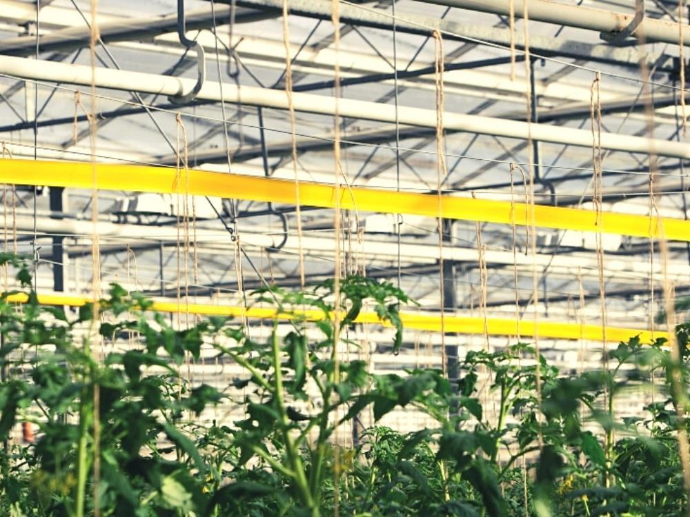 Taśma sygnalizacyjna żółta 100m x 15cm (Optiroll Super Plus)