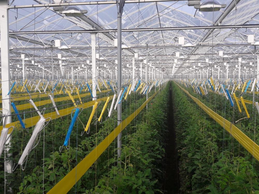 Zawieszka do pomidora V-hak 220 mm