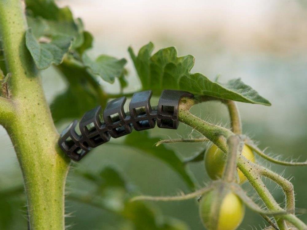 Łuk do gron pomidorów Flextruss czarny (19 000 szt.)