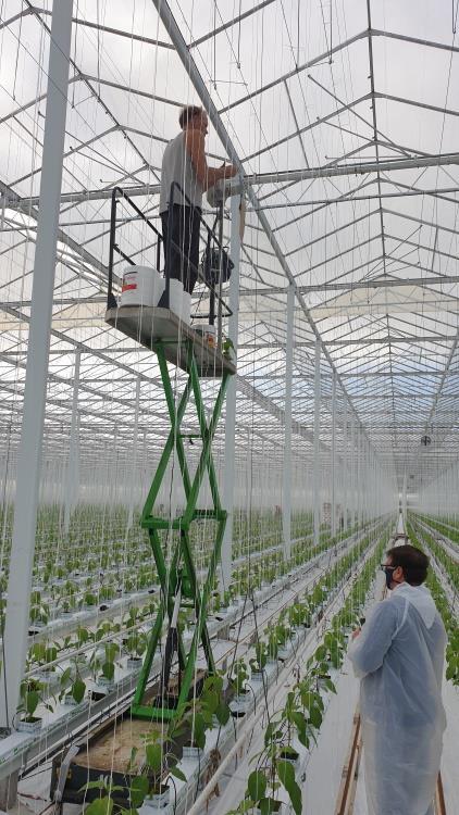 Sznurek valent 1/1200 6kg zielony
