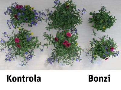 Bonzi 1l
