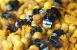 Ul z trzmielami Agrobio uprawy doświetlane [RBP]