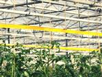 Taśma sygnalizacyjna żółta 100m x 15cm (Optiroll)