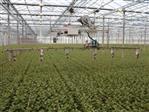 Biospreader - automatyczna aplikacja owadów pożytecznych