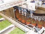 Automatyzacja przesadzania młodych roślin