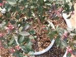 NetBow łuk kroplujący do nawadniania roślin w doniczkach