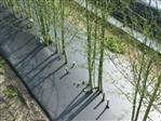 Folia biodegradowalna 12mic 200cm/1000mb (3 mies) perf.